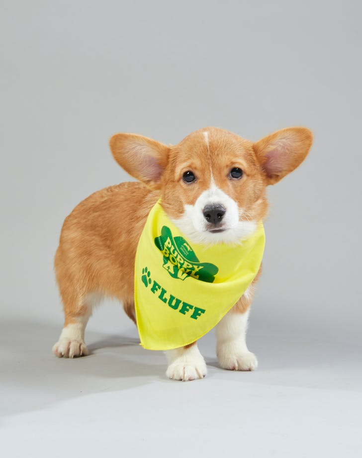 Puppy Bowl Clara Florida Little Dogs Rescue Fluff2