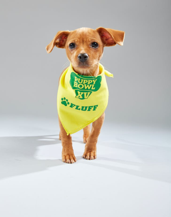 Puppy Bowl Dawn Citizens For Animal Protection Fluff
