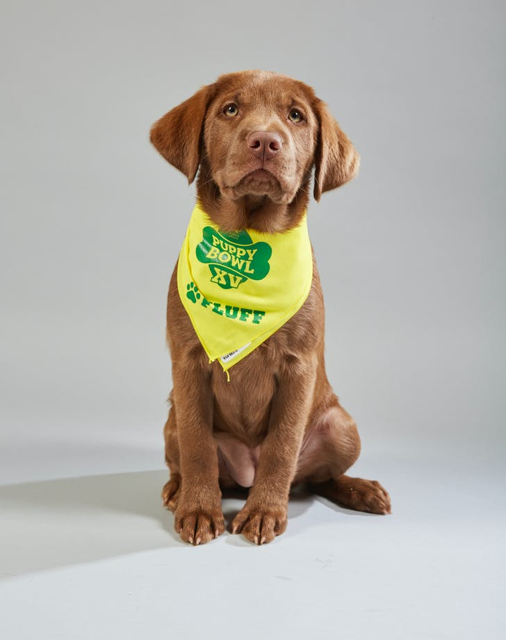 Puppy Bowl Maisey Jersey Girls Animal Rescue Fluff2