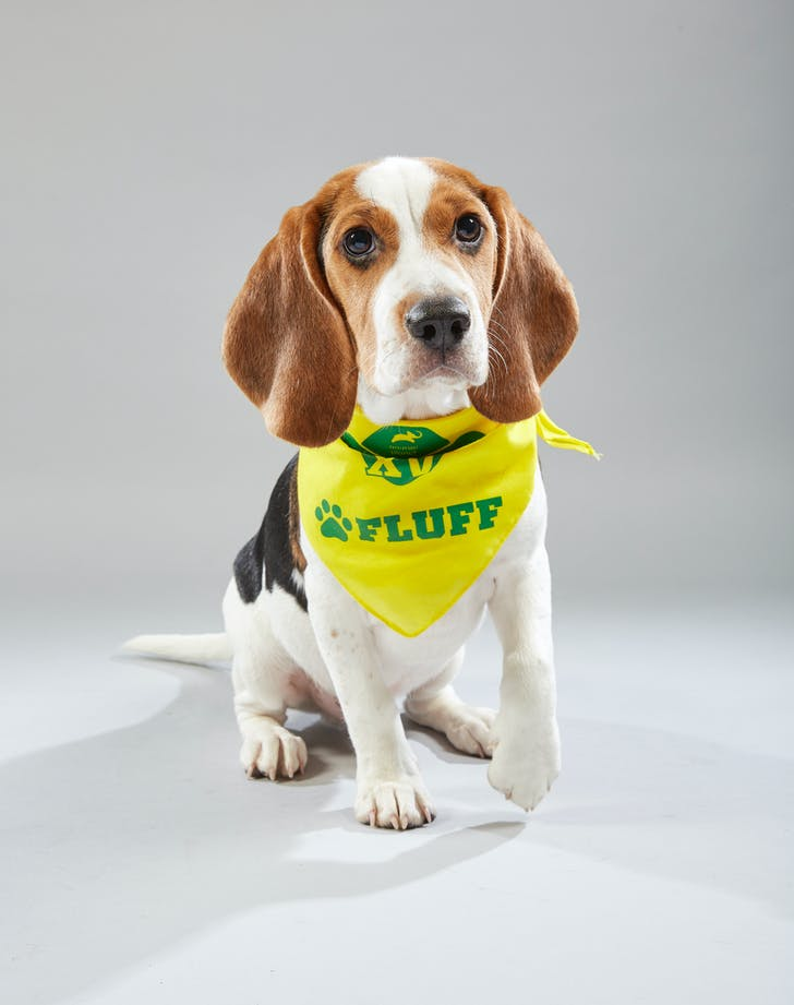 Puppy Bowl Remington Bonnie s Animal Rescue Kingdom Fluff