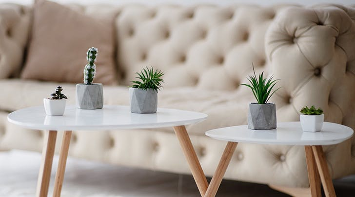 And the Most Popular Houseplant in America Is…