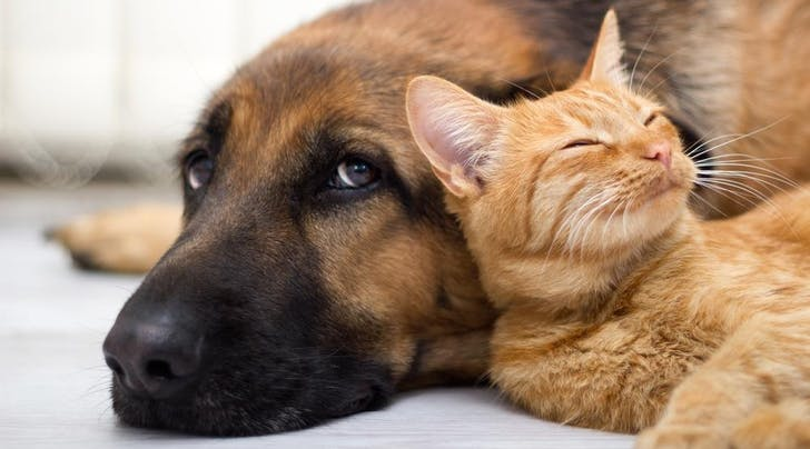 Animal Lovers, Rejoice! California Pet Stores Can Now Only Sell Rescue Animals