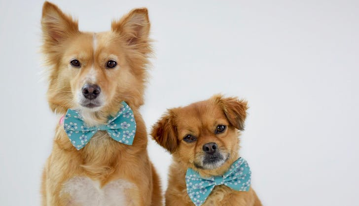 dont these doggies look dapper