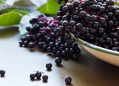 elderberries for cold and flu 400
