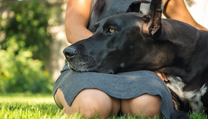 dog resting his head on his owerns lap