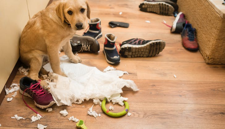 dog who ripped up paper towels and feeling really guilty about it now