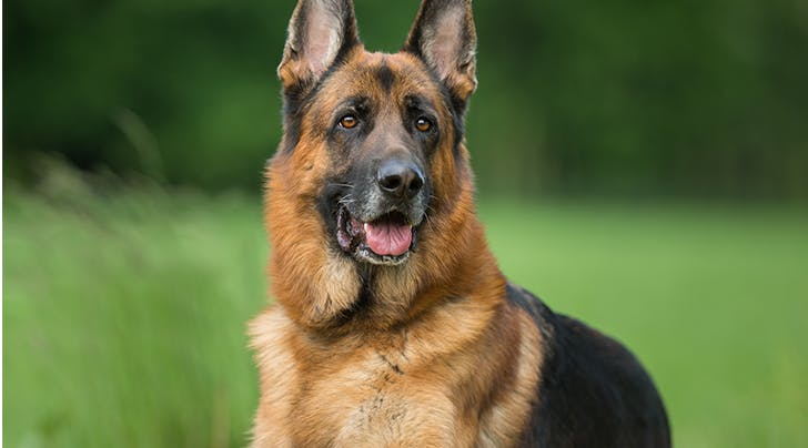 ISFJ? This Is the Best Dog for Your Personality