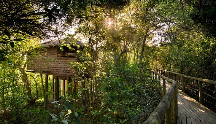 Tsla Treetop Lodge in Plettenberg Bay South Africa