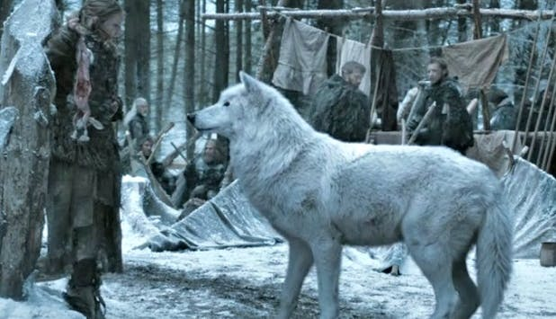 WHAT ARE DIREWOLVES AGAIN