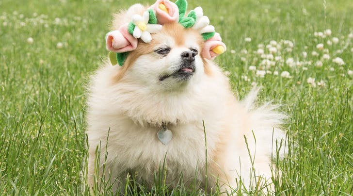Dog Flower Crowns Are a Thing, Because Coachella Is Coming