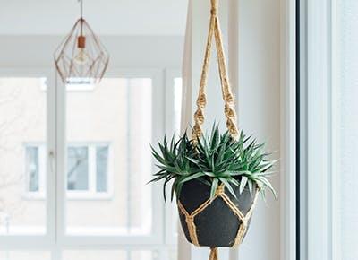 hanging plant in room cat