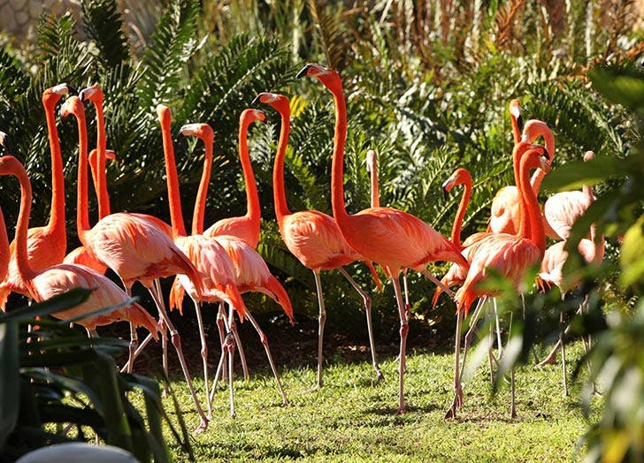 jungle island flamingo