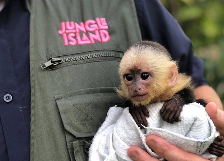 jungle island monkey