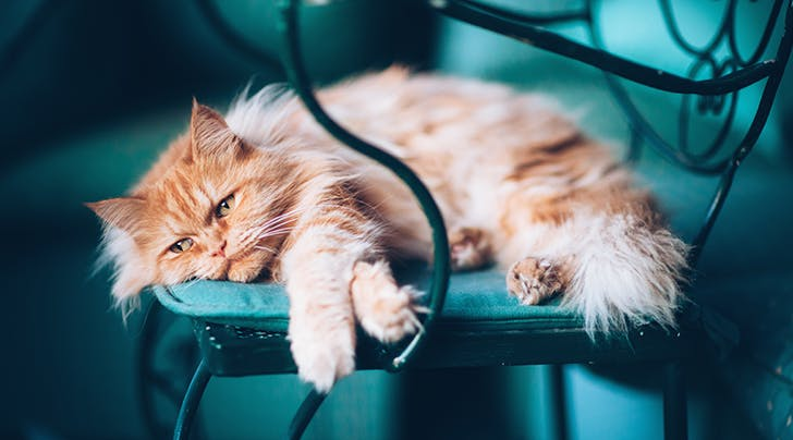 4 Signs Your Cat Might Have Separation Anxiety - PureWow
