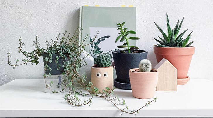 Millennial Reasons Your Plant Is Dead