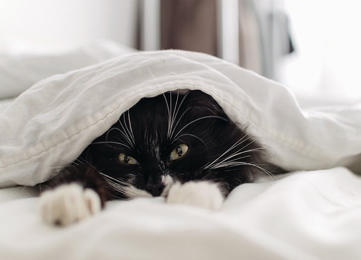 6 Reasons It's Actually Better to Let Your Cat Sleep in Your Bed