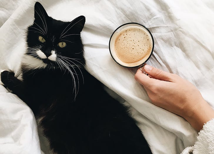 Black cat with cup of coffee in bed