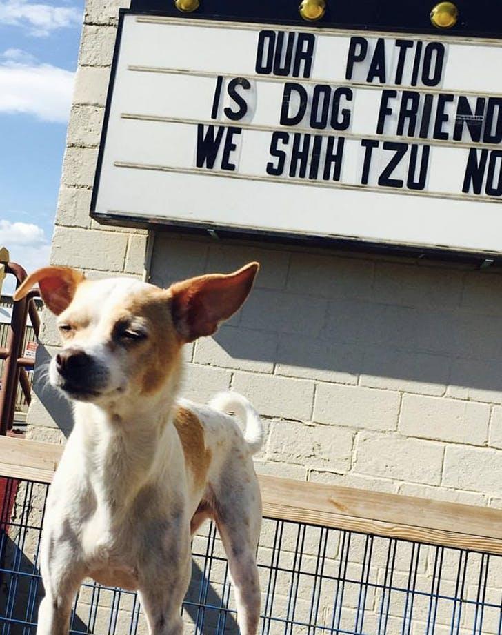 ballyhoo new york dog friendly bar