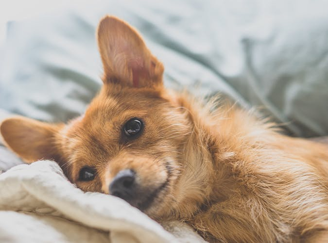 Why You Should Let Dogs Sleep In The Bed Purewow