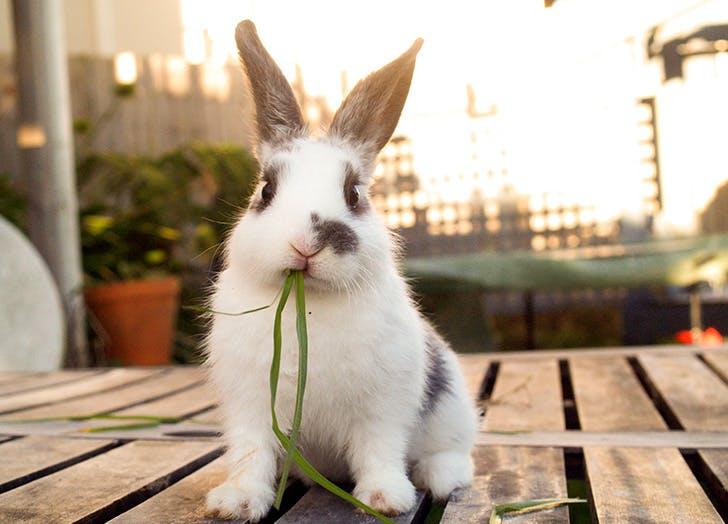 bunny eating grass cruelty free beauty