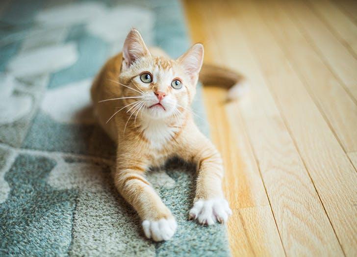 cute cat cruelty free beauty