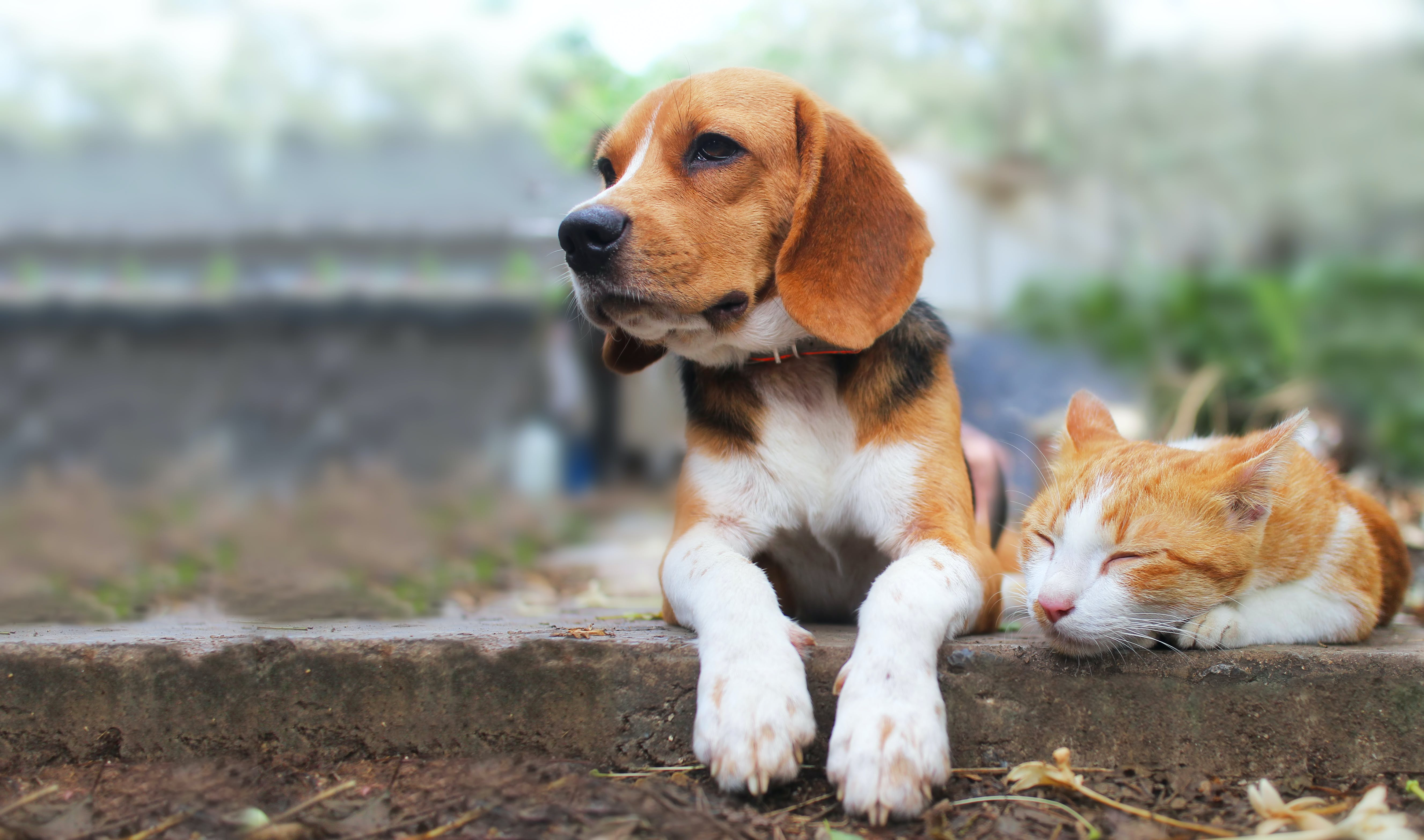 9 Dogs That Get Along With Cats Just Purr Fectly Purewow