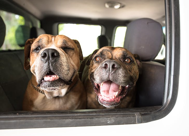 Why You Should Never Allow Your Dog to Ride in the Front Seat