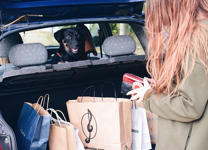 dog car safety comfort