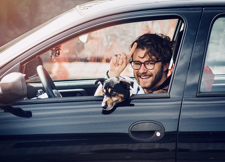 dog car safety distractions