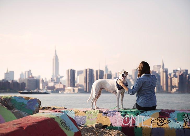 dog skyline