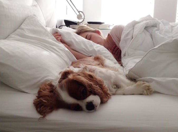 dog sleeping in bed with woman