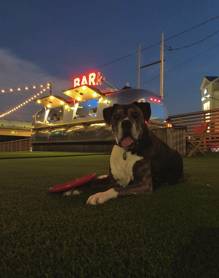 fetch park and ice house georgia dog friendly bar