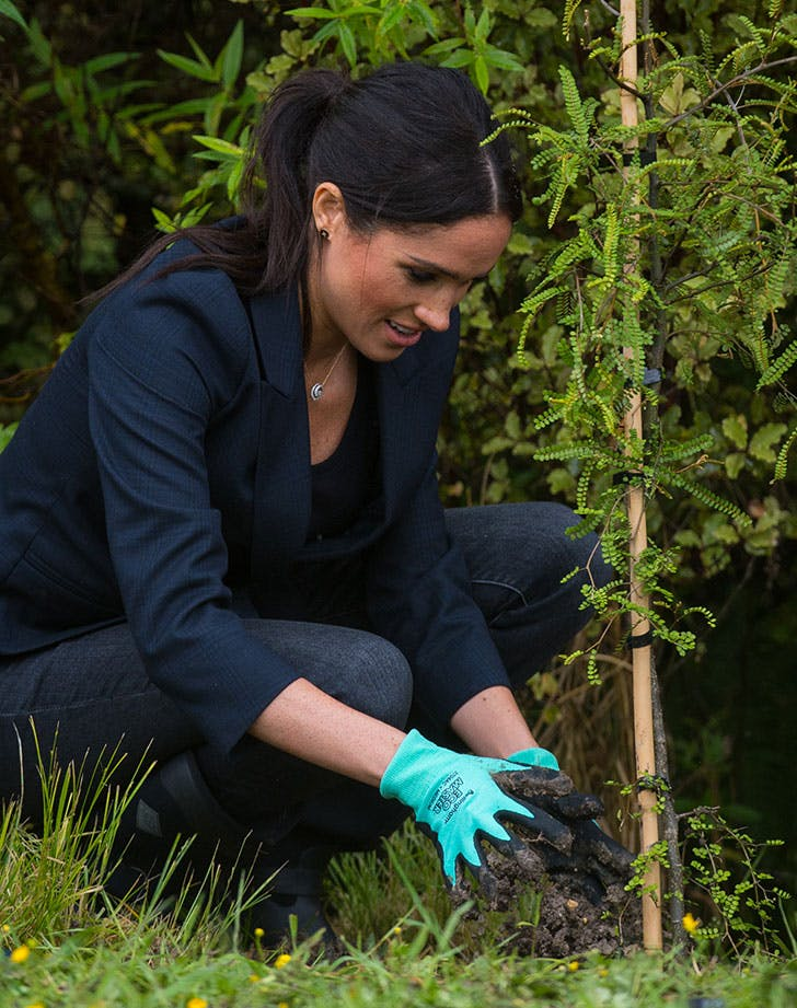 Our Kinda Neighbors: Harry and Meghans New Home Garden Includes Mulberries...for Making Gin