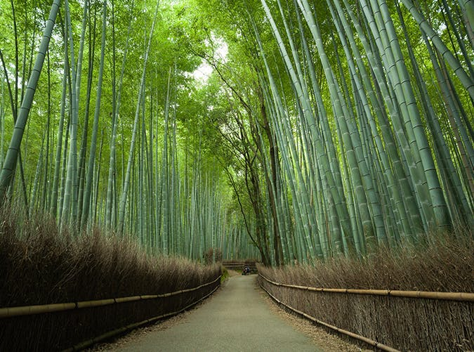 most beautiful places in the world japan bamboo