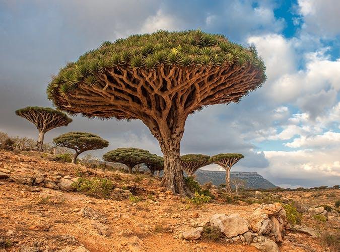 Йемен. Сокотра