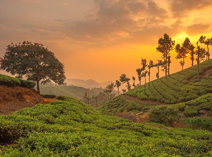 most beautiful places in the world tea plantations