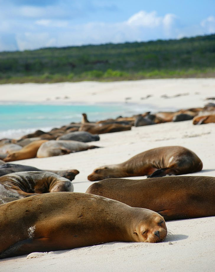 sea lions hanging on a beach in the galapagos