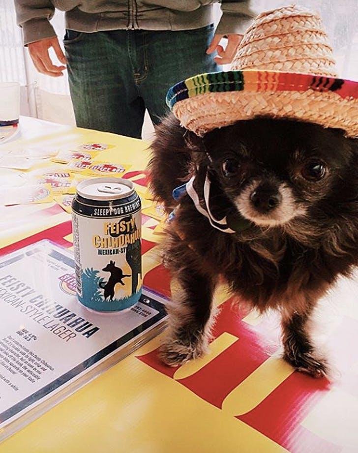 sleepy dog brewing arizona dog friendly