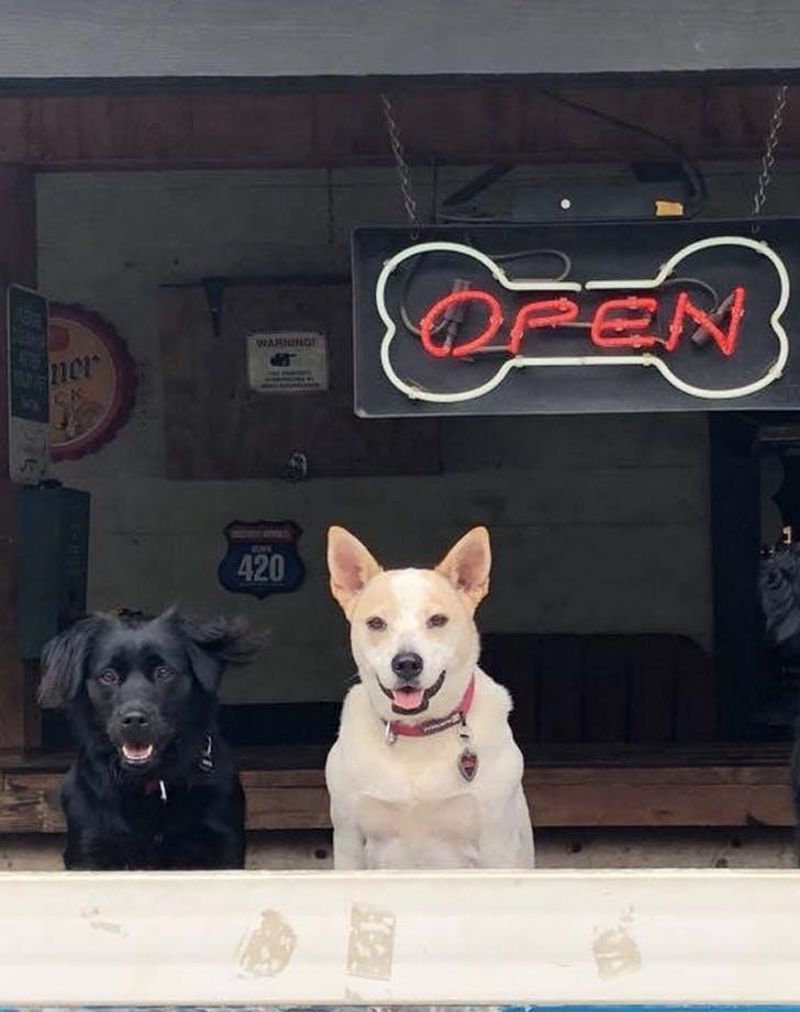 the dog bar north carolina