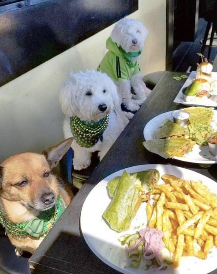 the morrison pub california dog friendly
