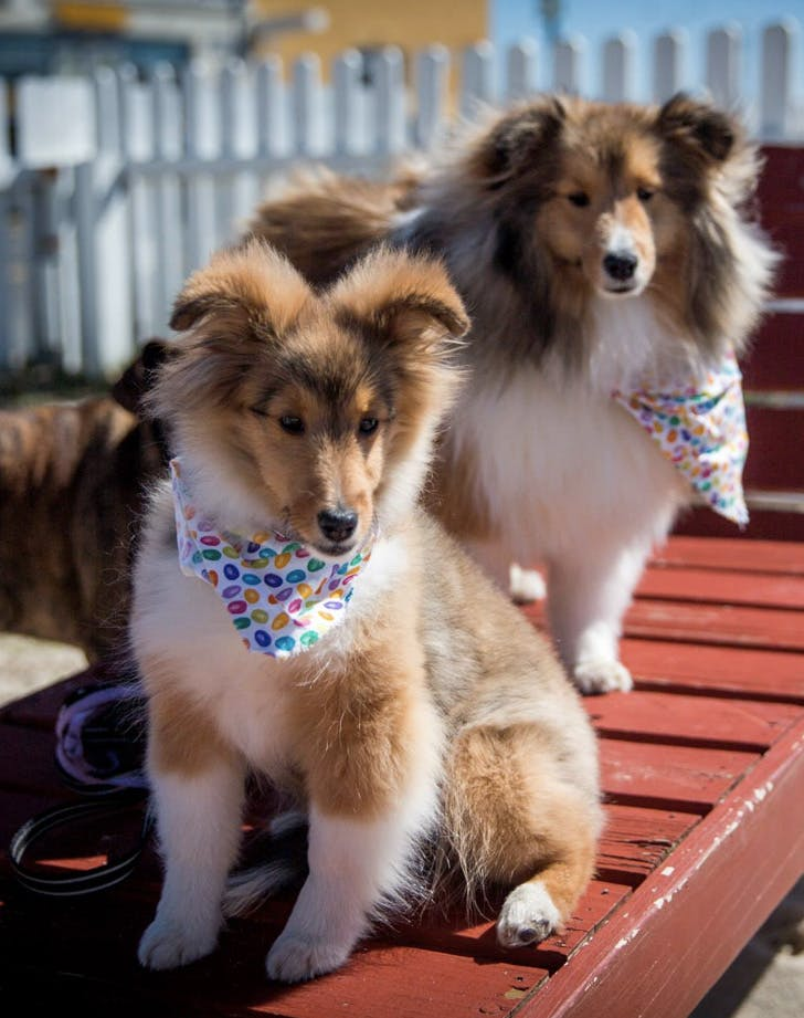 the wonder bar new jersey dog friendly