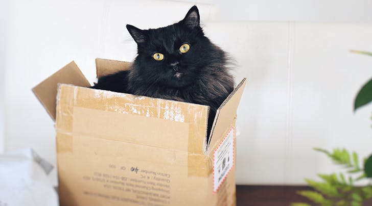 Why Do Cats Meow? Here's What You Pet Is Saying - PureWow