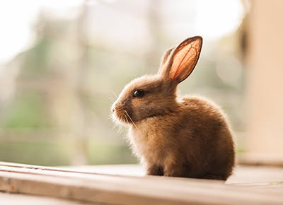What Does Cruelty-Free Actually Mean? - PureWow