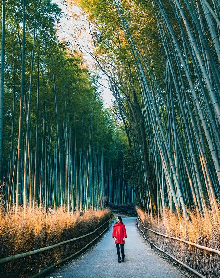 woman walking through a bamboo grove in japan