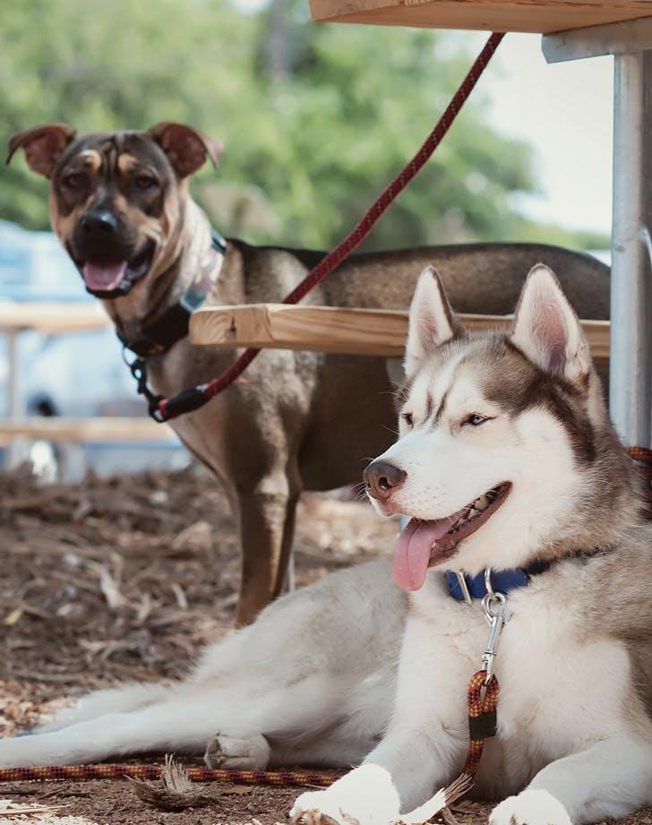 yard bar texas dog friendly