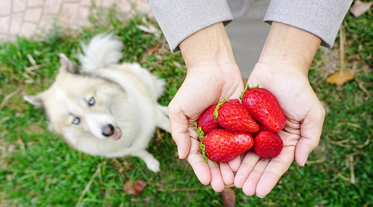 Question: Can Dogs Eat Strawberries?