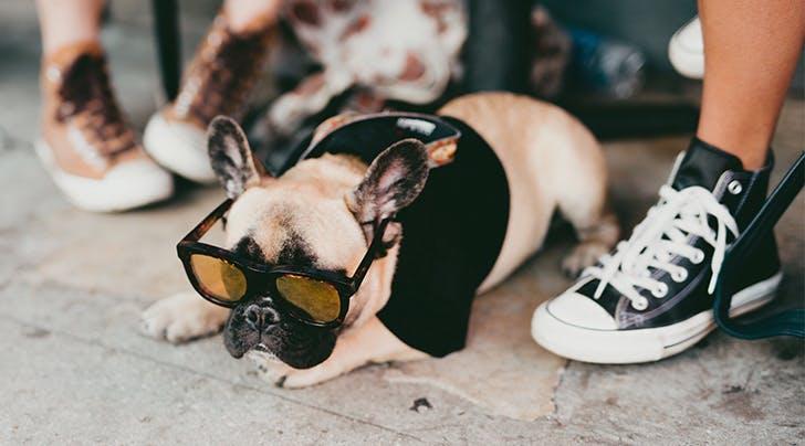 Can Dogs Get Sunburn?