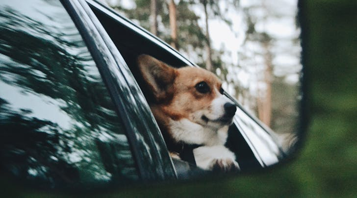 Can Dogs and Cats Get Motion Sickness?