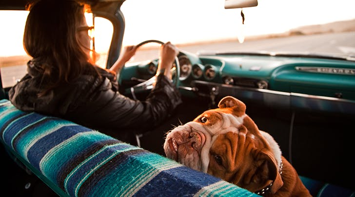 Everything You Need to Plan a Safe Road Trip with Your Dog