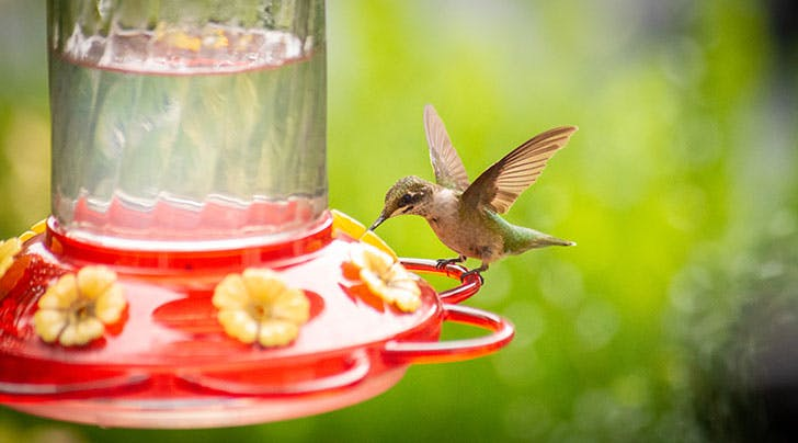 How to Make Hummingbird Food for Your Garden